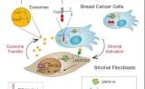 """Cell:狡猾癌细胞指示普通细胞分泌""""病毒样""""外泌体,让肿瘤更加凶险"""