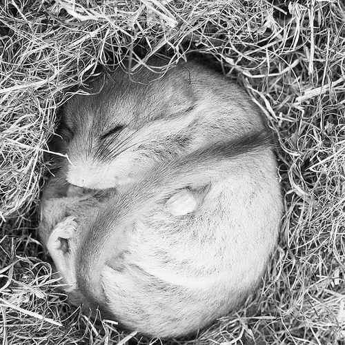 这其中的原因自然离不开动物在冬眠中出现的一些奇特的生理和活动特征