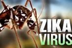 美发布人类细胞与组织捐献指南防范寨卡病毒