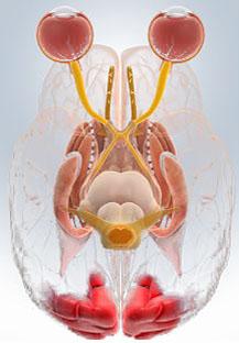 美国科学家发现DNA非编区SNP与脑肿瘤关联性强