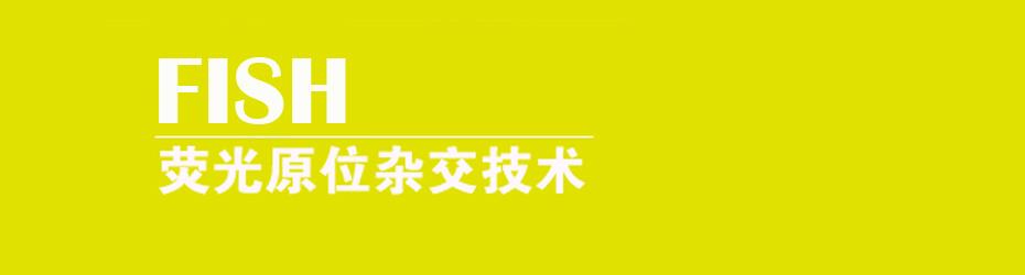 荧光原位杂术(fih)