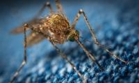 世界上最恐怖的蚊子遇上神奇的CRISPR基因编辑技术,能否终结疟疾?