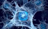 《细胞》子刊:PD-1抗体抗癌的真相,我们理解错了!