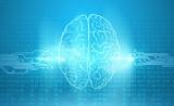 港大发表PNAS:刺激大脑海马体,可增强视力听力和触觉等反应达20%