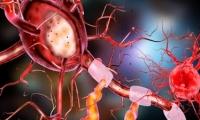 Cell子刊:老年人仍可以再生神经元,阿尔茨海默症患者亦是如此