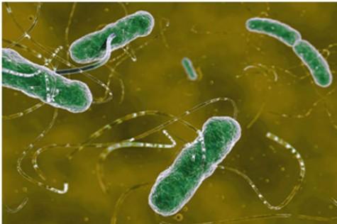 肠道菌群会影响糖尿病药物疗效