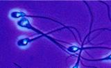 单细胞技术—基因测序新方向