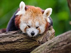 柳葉刀子刊:失眠新療法可有效改善睡眠狀況,降低睡眠藥物依賴