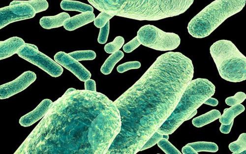 微生物的身体结构图片大全