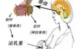 薛之谦前妻被爆患垂体瘤,治疗要1000万?