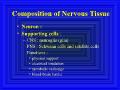 北大神经生物学课件 2_1神经元和神经胶质细胞-神经元