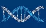测序大拿《Nature Genetics》指出广泛使用的人类参考基因组缺失3亿个DNA