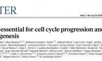 今日《自然》:短短3页论文,科学家意外找到了治疗肝癌的潜在新靶点!