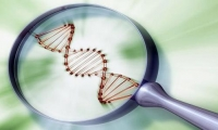 SMRT测序盘点:看哪个才是最靓的基因测序研究