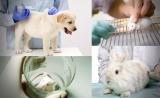 赛业生物科技与Taconic达成战略合作,共同推动模式动物定制及繁殖服务