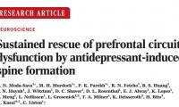 《科学》首度揭示:明星抗抑郁药真的可以修复大脑!