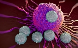 JCI解析: CD8+T细胞的分裂命运受谁调配?