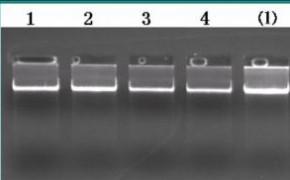 基因组DNA提取服务