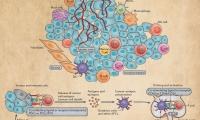 癌症免疫疗法12张干货图片 | Nature巨献