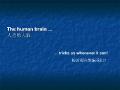 The Human Brain-别给人类的大脑欺骗了