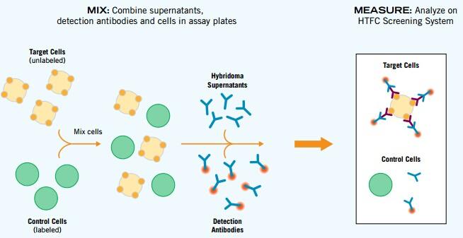 细胞克隆形成实验步骤