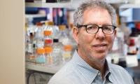 """Cell最新靶点:摄入与消耗""""双把关"""",""""饥饿神经元""""成为减肥药物新途径"""