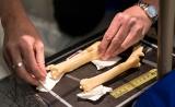 还记得那个克隆羊多莉吧?骨骼研究显示其属于正常老化