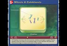 Mitosis and Cytokinesis-有丝分裂和胞质运动