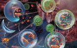 Nature: 阻止细胞返老还童的关键因子