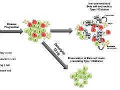 Cell子刊:這款抗癌新藥竟可能預防1型糖尿病?