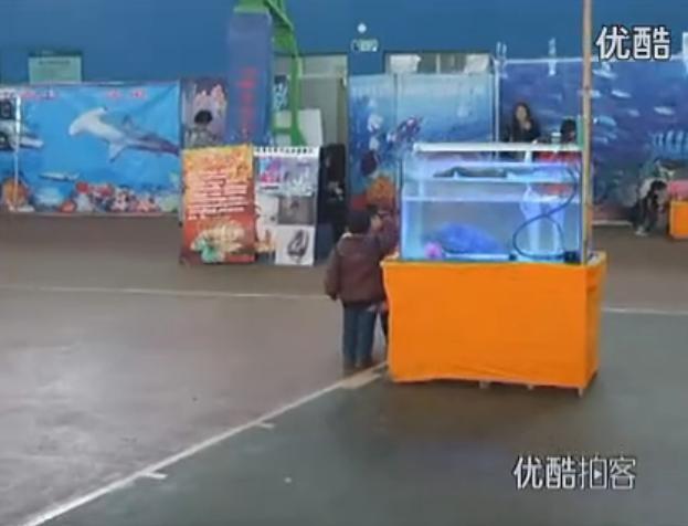 淅川县大型海洋生物科普知识展
