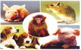 BioTechniques:动物研究的十佳新论文