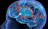 """意义重大!Science:基因也有""""生物钟"""",至少影响150种疾病"""