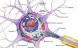 Science关键发现:每个神经细胞都独一无二