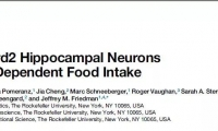面對食物,控制不住你自己?科學家找出了能控制少吃的一群腦細胞