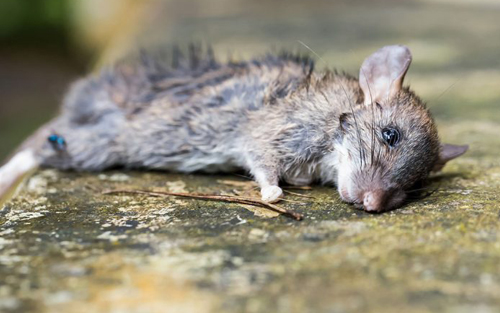 长春动物救助一个基地实拍,基地里的猫狗已全部饿死