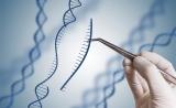 上海生科院等揭示APOBEC3介导的DNA修复在CRISPR/Cas9基因编辑中突变新机制