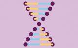 """Nature热评:CRISPR疗效受免疫反应""""威胁""""!"""