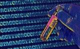 杨力、陈玲玲合作组揭示m6A修饰对A-to-I 类RNA编辑的调控作用