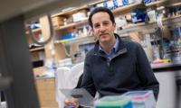 两篇论文证明:基因编辑为镰状细胞病和β地中海贫血患者带来福音