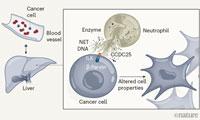 """Nature揭示人體""""殺菌神器""""如何變成癌癥轉移""""幫兇"""",有望阻止癌癥擴散"""