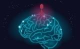 病毒引发阿尔兹海默症?一场新的致病机理争论 | Cell子刊