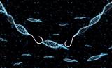 Nature丨于洋博士等发现基因组长片段DNA插入的新机制