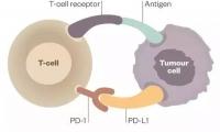 优于进口药背后:国产PD-1/PD-L1临床开发攻略