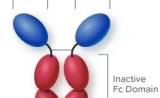 CD47抗体/融合蛋白的临床布局:信达、恒瑞角逐国内市场