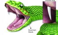 Science子刊:受毒蛇启发!超快速无痛贴片注射器已成功出道