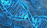 PNAS:第一个不需要引物的 DNA 聚合酶