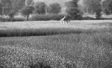 印度有望批准首个转基因作物