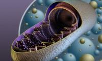 Cell Res | 北京大学王显花团队等人揭示线粒体能量和活性氧代谢的重要调节因子,提供心力衰竭治疗新靶标