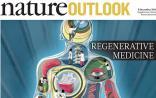 Nature特刊:再生醫學如何讓你滿血復活